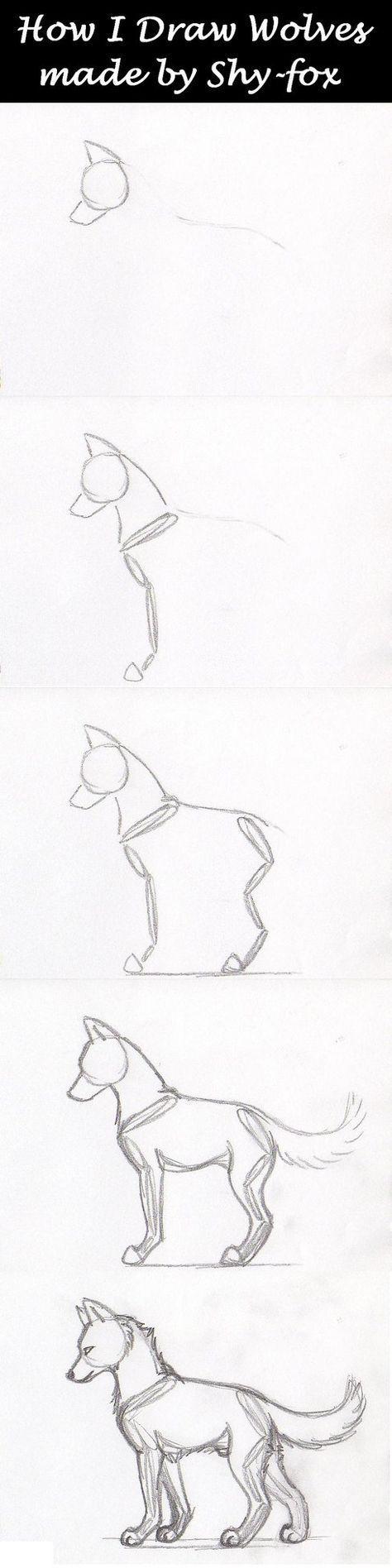 Photo of drawing wolf anatomy by shy-fox on DeviantArt