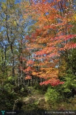 Autumn in upstate New York #Creative #Art #Photography @touchtalent.com