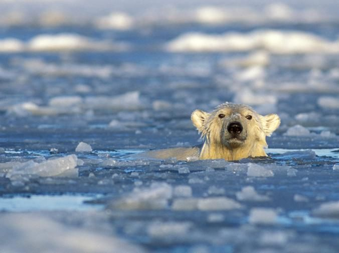 Image result for fossil fuels affecting animals
