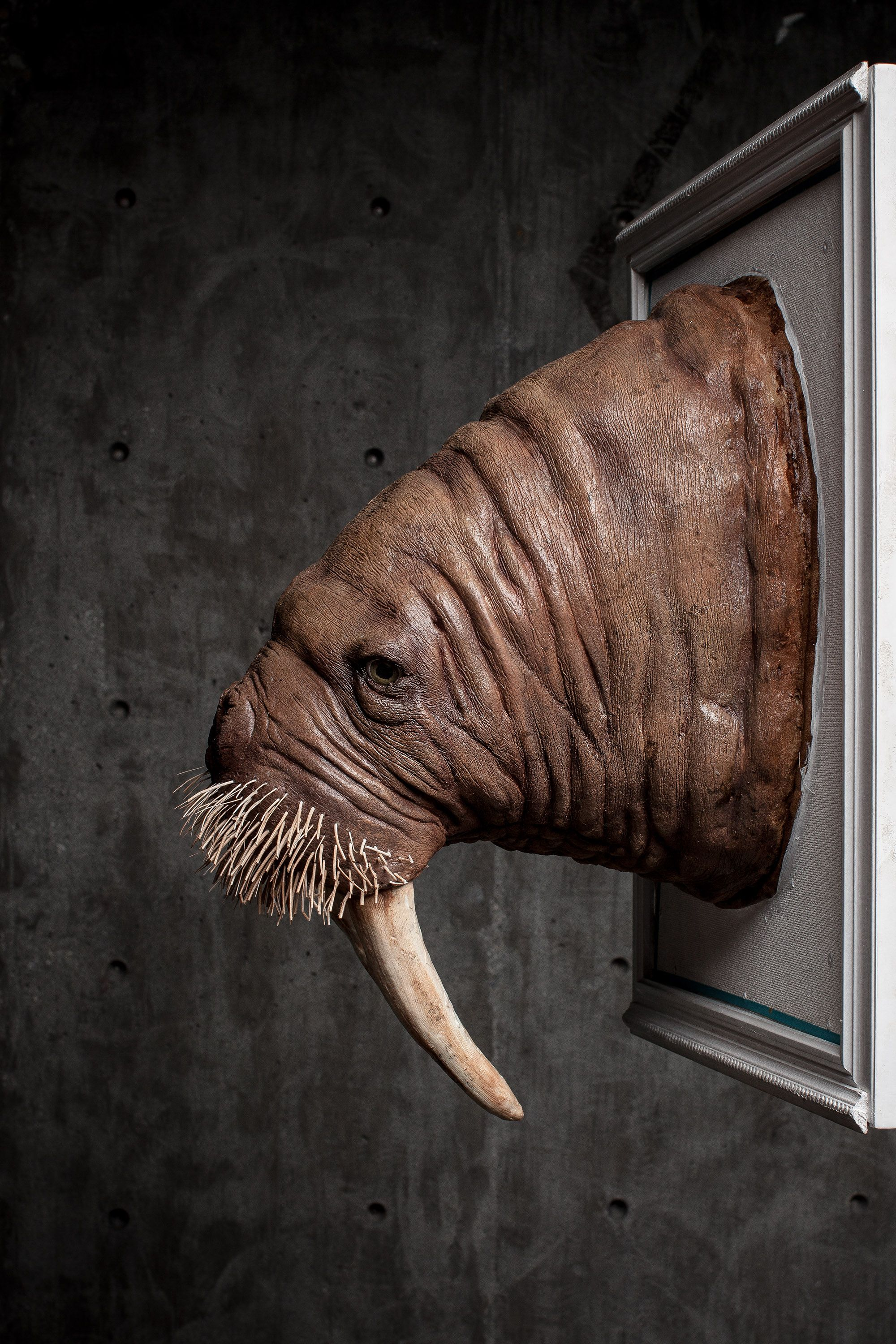 The Pacific Walrus- made from all vegan materials, Wilde Animal heads are meant to educate people about endangered and vulnerable species and show appreciation for these animals without killing them. Learn more and get your own Wilde Animal at www.wildeanimals.com