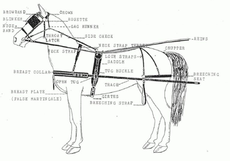 Diagram Of Horse Harness Wire Center