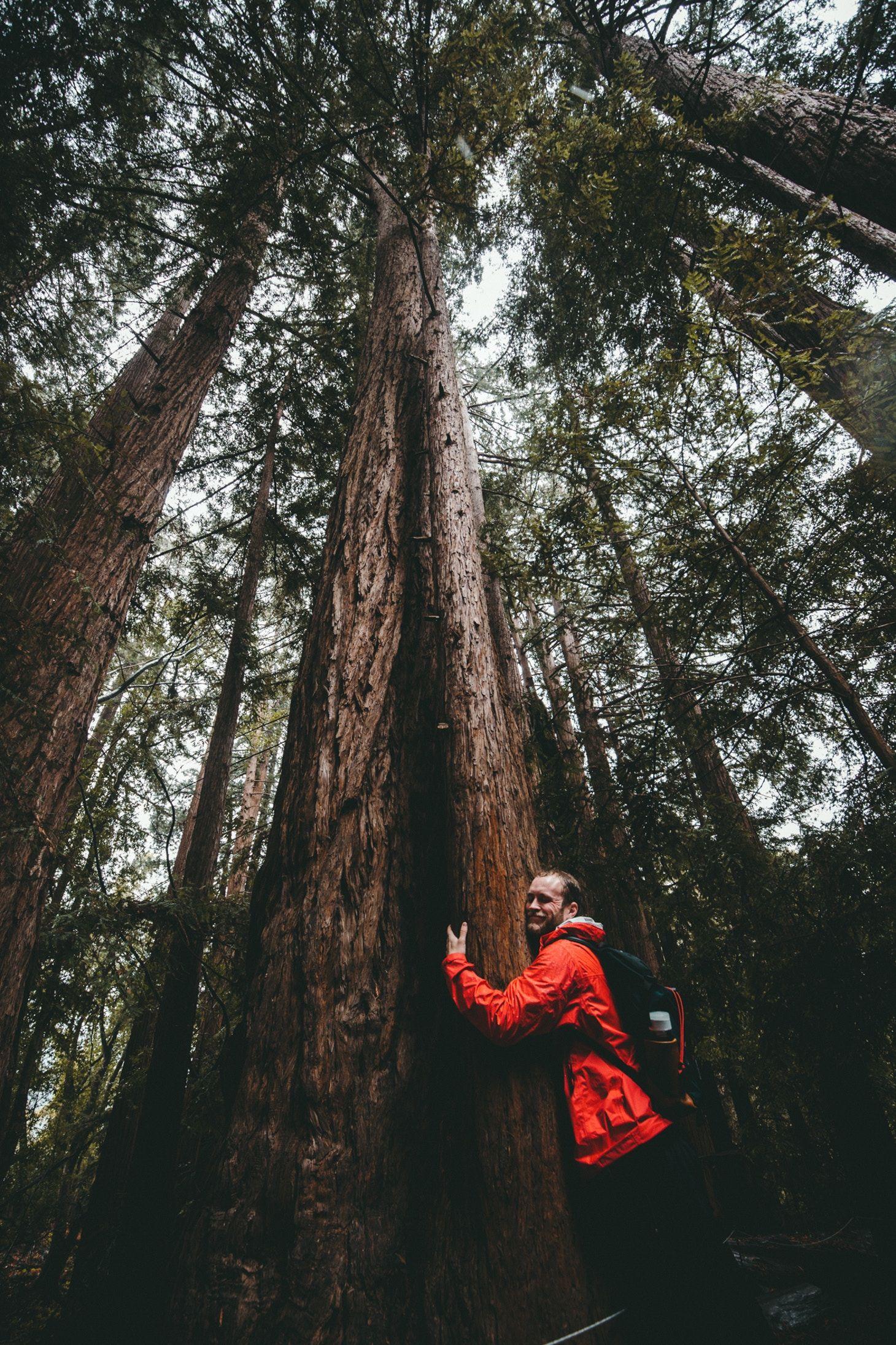 Mammutbäume im Redwood Nationalpark: Die höchsten Bäume der Welt!
