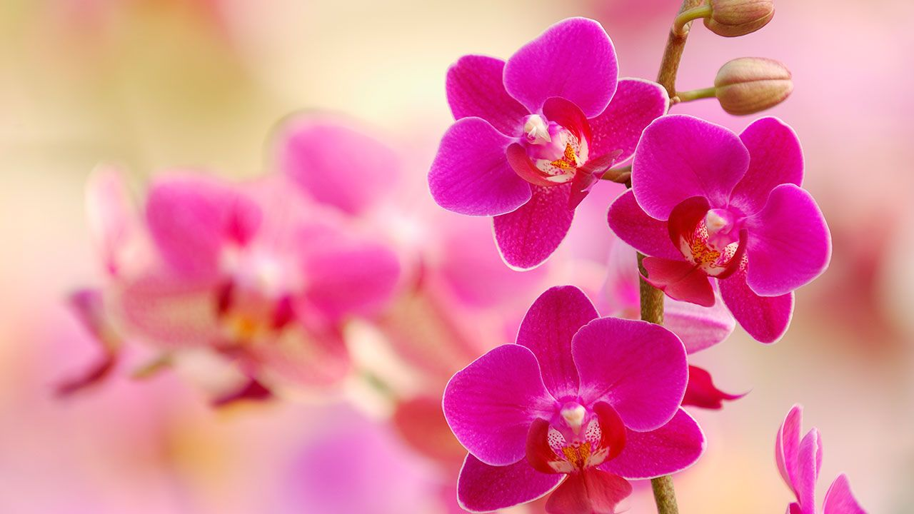How to grow orchids at home | OverSixty #growingorchids