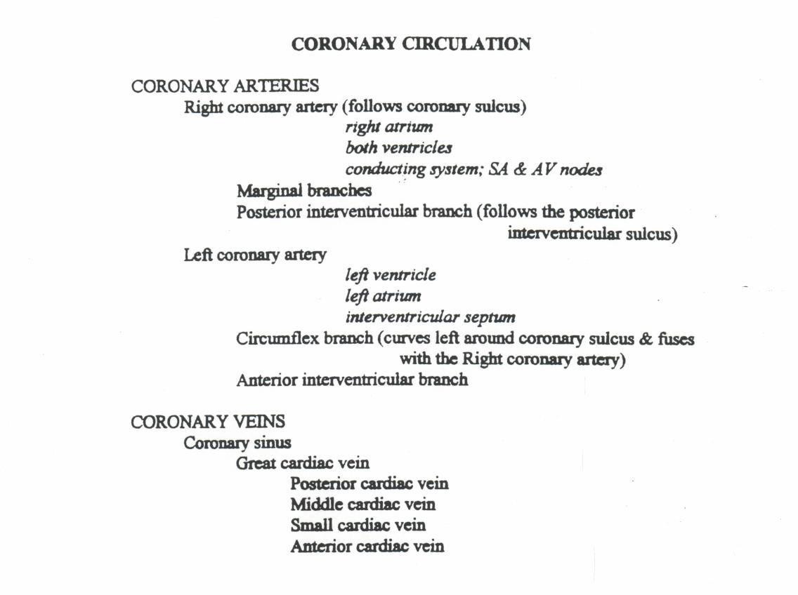 Coronary Circulation Pathway