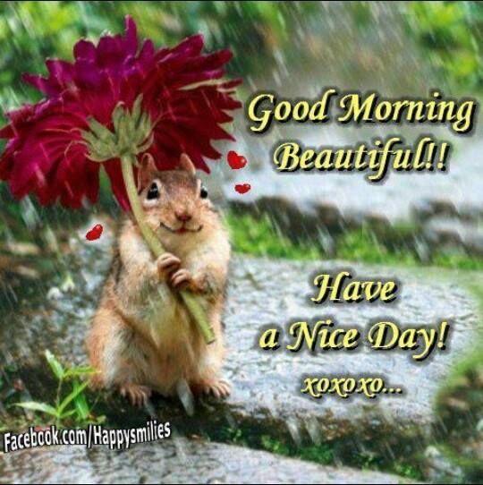 Good Morning Beautiful You Facebook : Good morning beautiful have a nice day