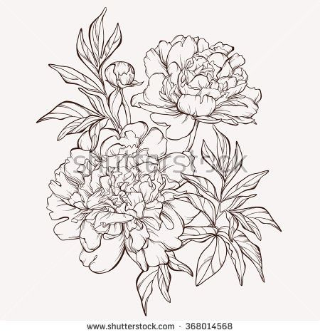 vector peony flower isolated on white background element