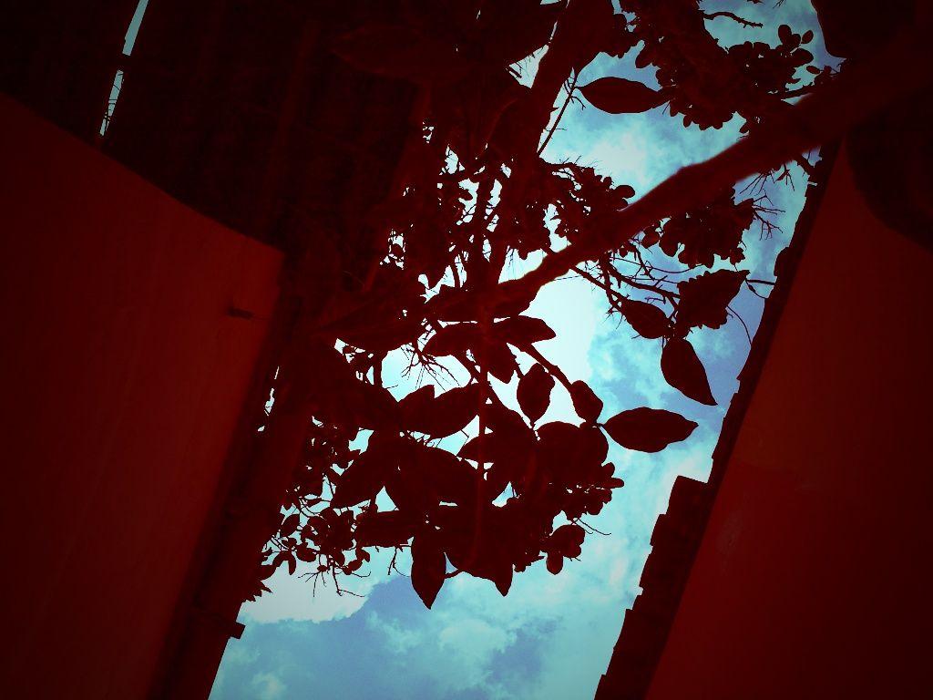Jardim de casa (Home garden). #Paisagens • 5