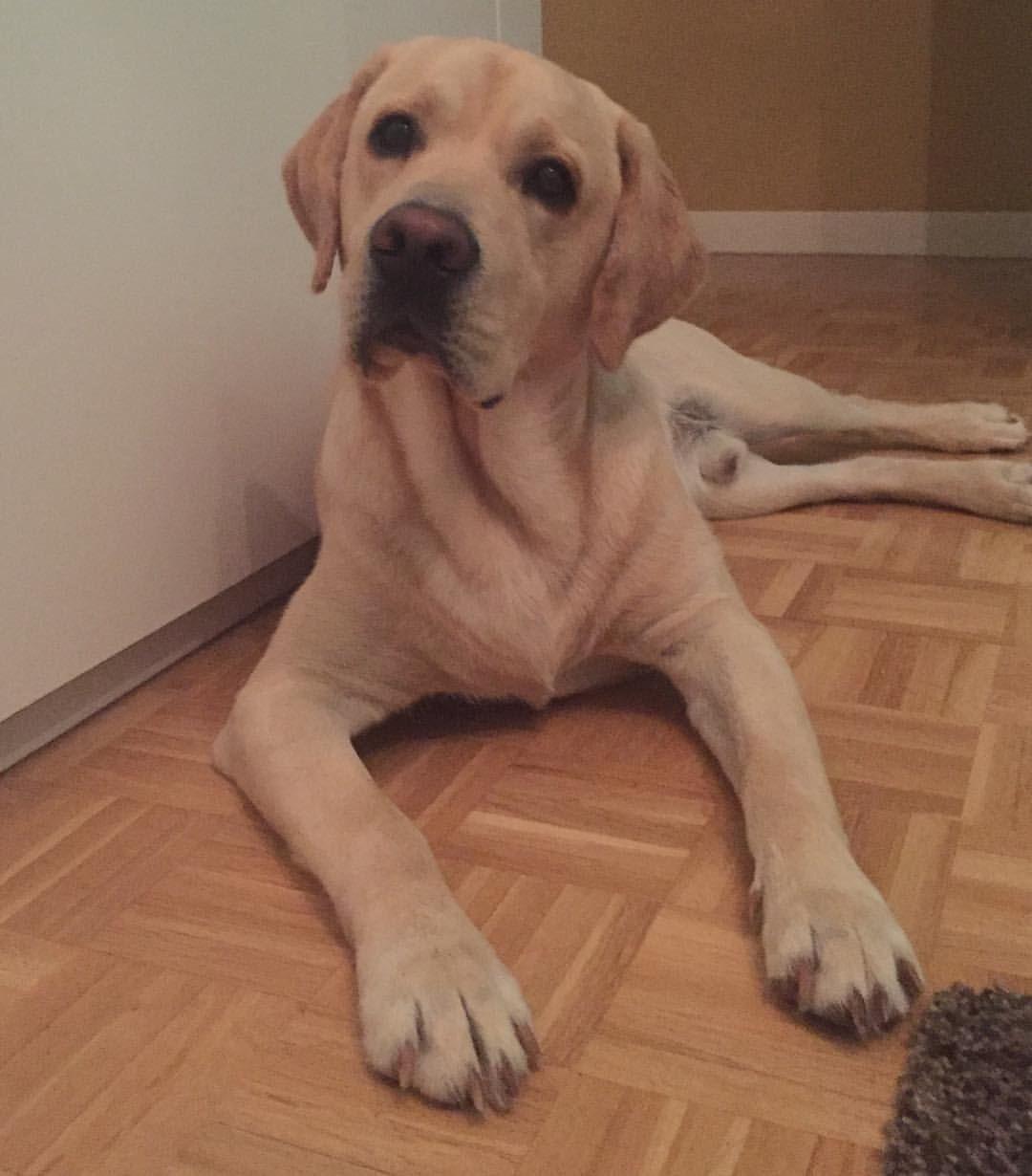 Mi perro Boomer pertenece al reino de los animales. Es vertebrado ...