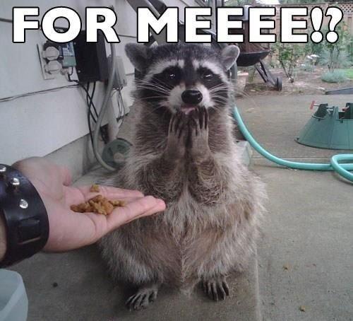 Lol raccoon