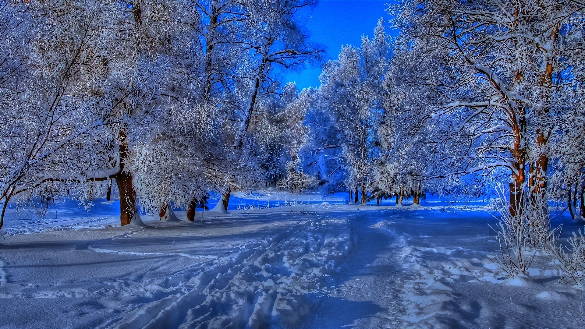 winter nature best wallpapers ever - photo #36