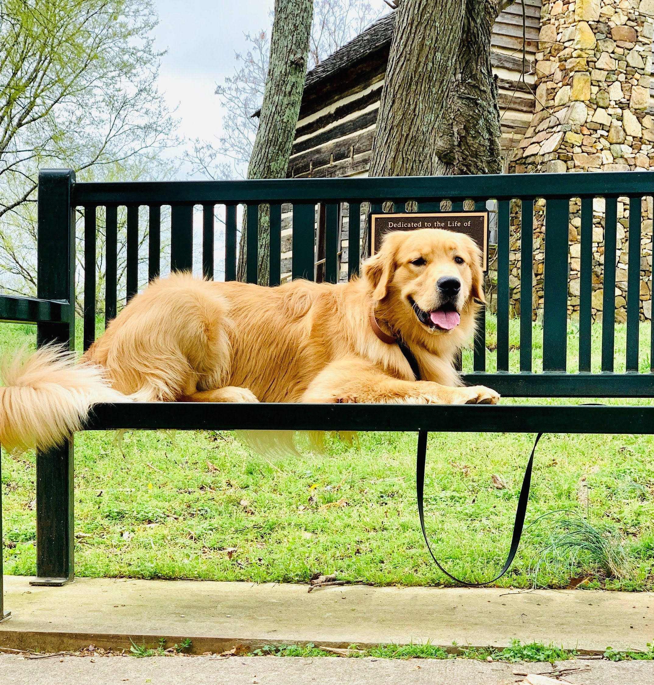 Dog On Park Bench With Custom Plaque In 2020 Commercial Outdoor Benches Dogs Easy Garden