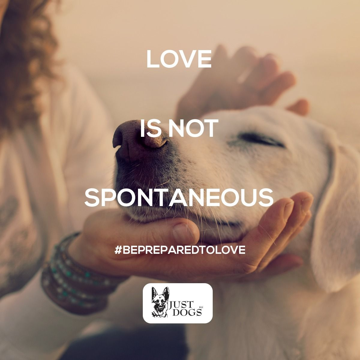 Love Needs You To Be Prepared It Is Not Only Spontaneous It Requires You To Put In Some Effort And Make Plans Showing Your Pets Tha Dog Lovers Dogs Dog Care