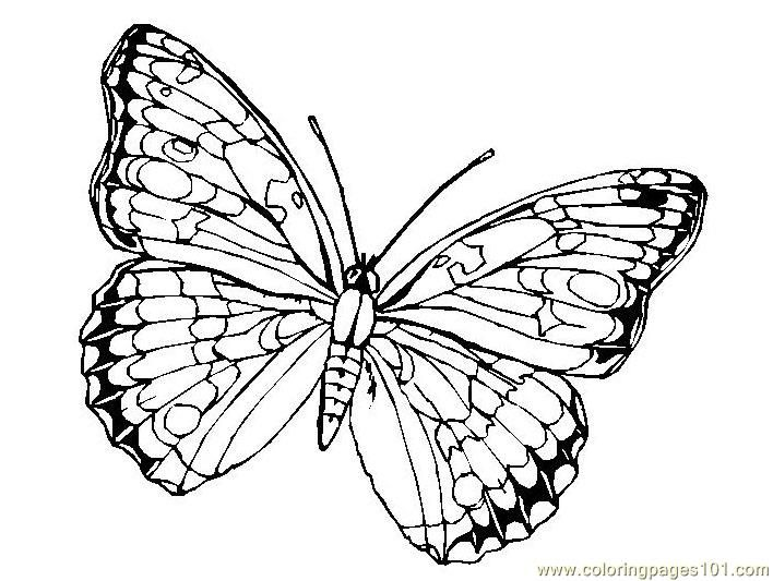 Butterfly Colouring Pages Butterfly Coloring Page Coloring