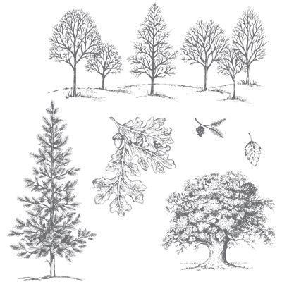 Lovely As A Tree Clear Mount Stamp Set By StampinUp Fabulous For Any Season Only 1995