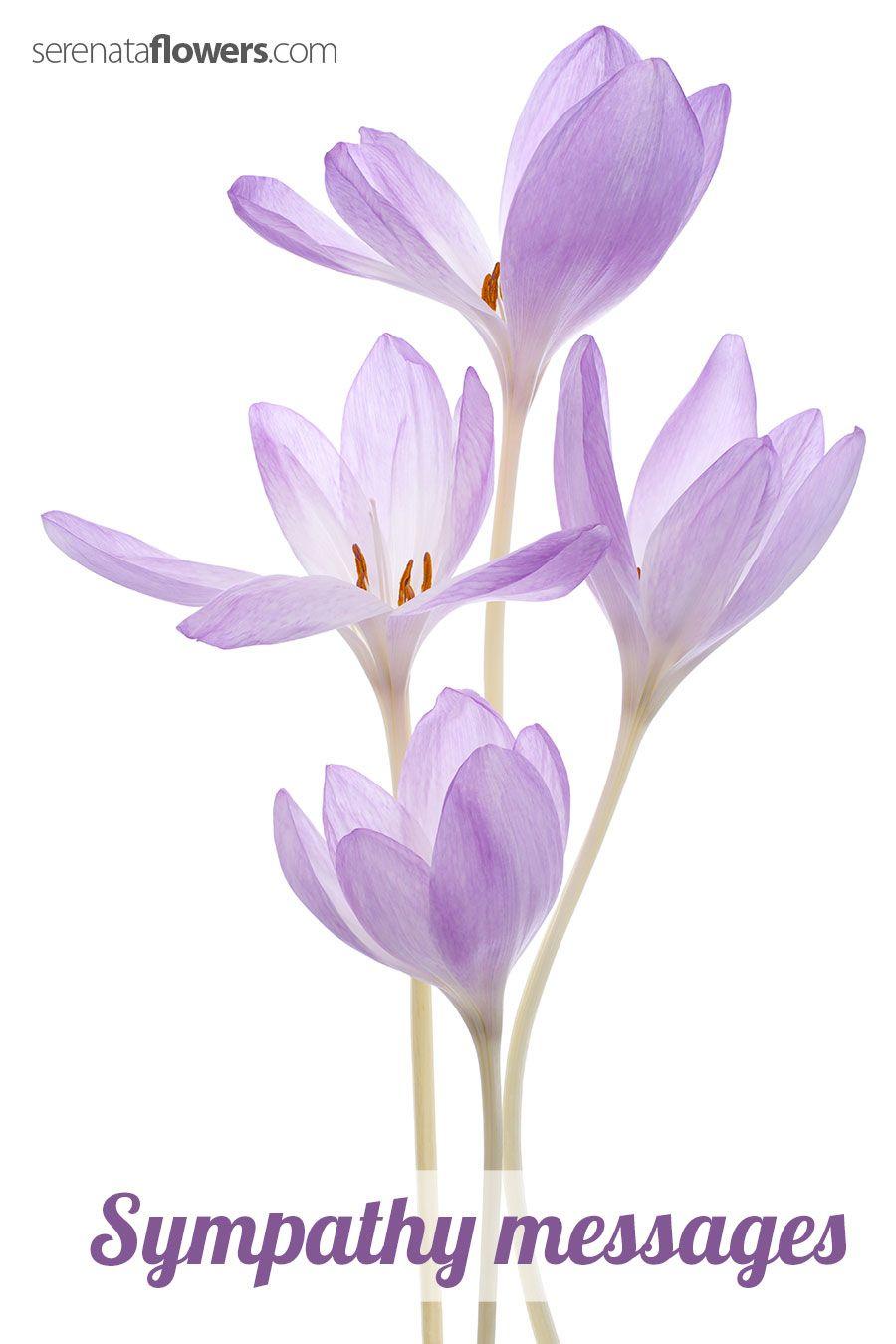 SympathyMessages  Sympathy    Sympathy Flowers