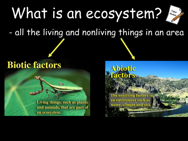biotic factors | Biotic Factors Abiotic Factors | Biology Project ...
