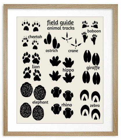 Jungle Nursey Art Field Guide Animal Tracks Safari