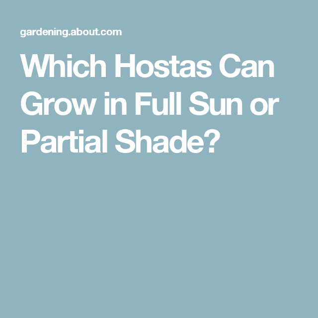 Which Hostas Can Grow in Full Sun or Partial Shade?