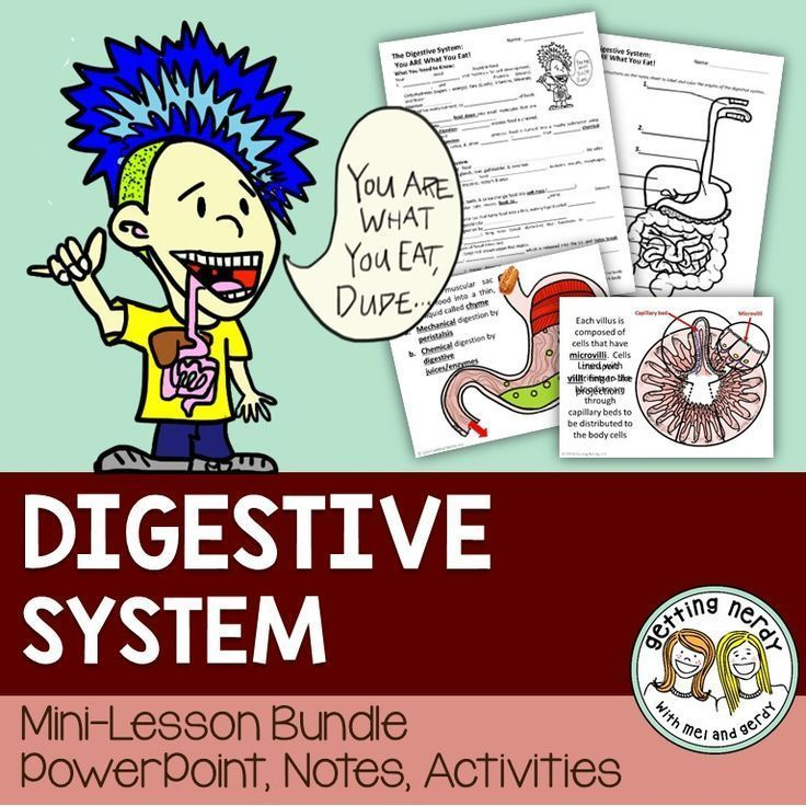 Digestive System Human Body Powerpoint And Handouts Human Body