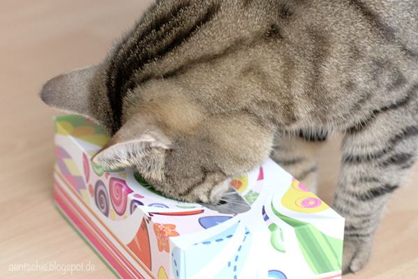 aentschies Blog: Katzenspielzeug DIY