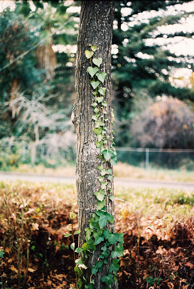 the leaves look like little hearts on the tree :)  photography by Simon Filip