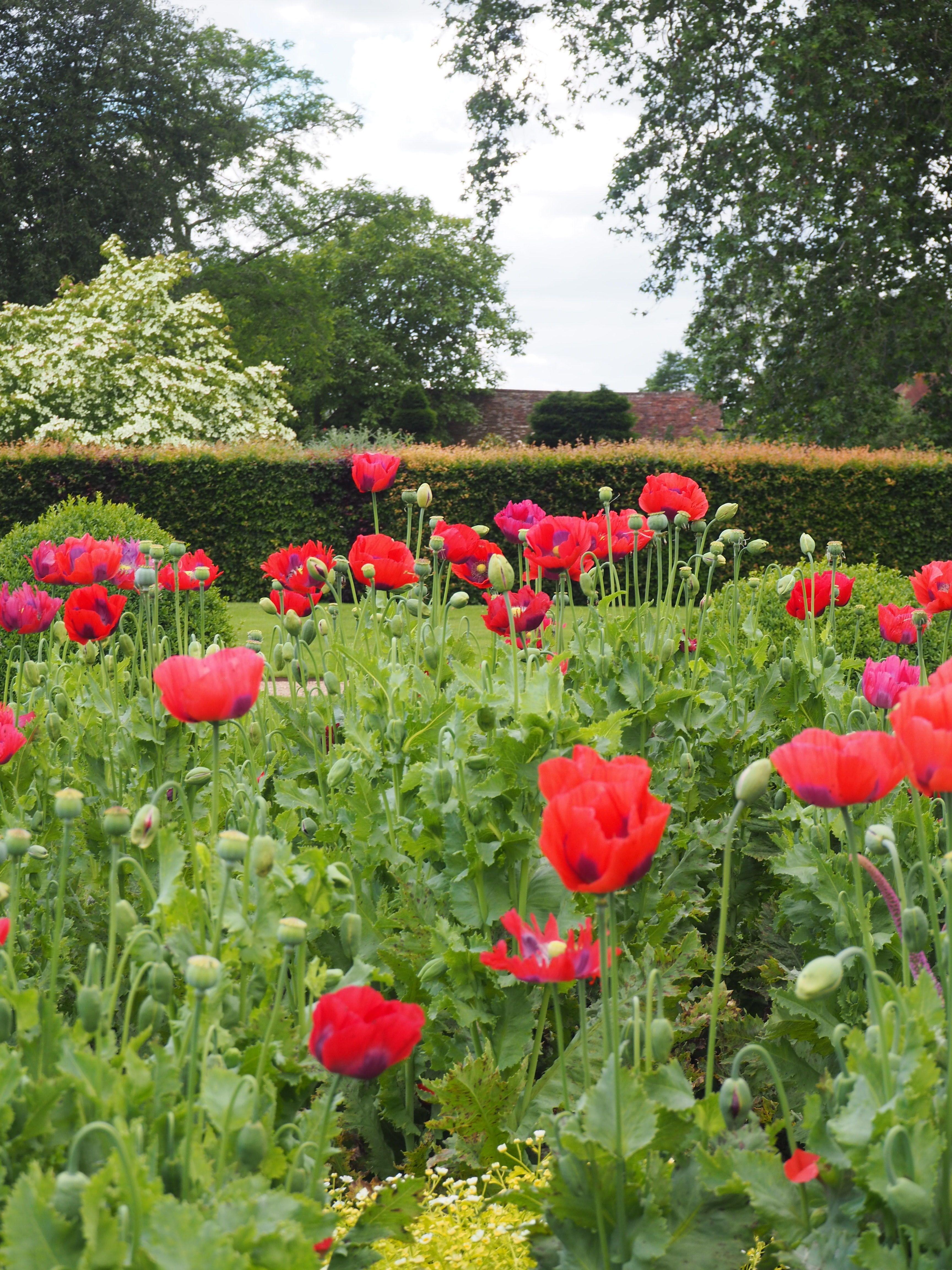 Englische Blumenarten Fur Den Garten Tea And Scones Blumenarten Pflanzen Englischer Garten