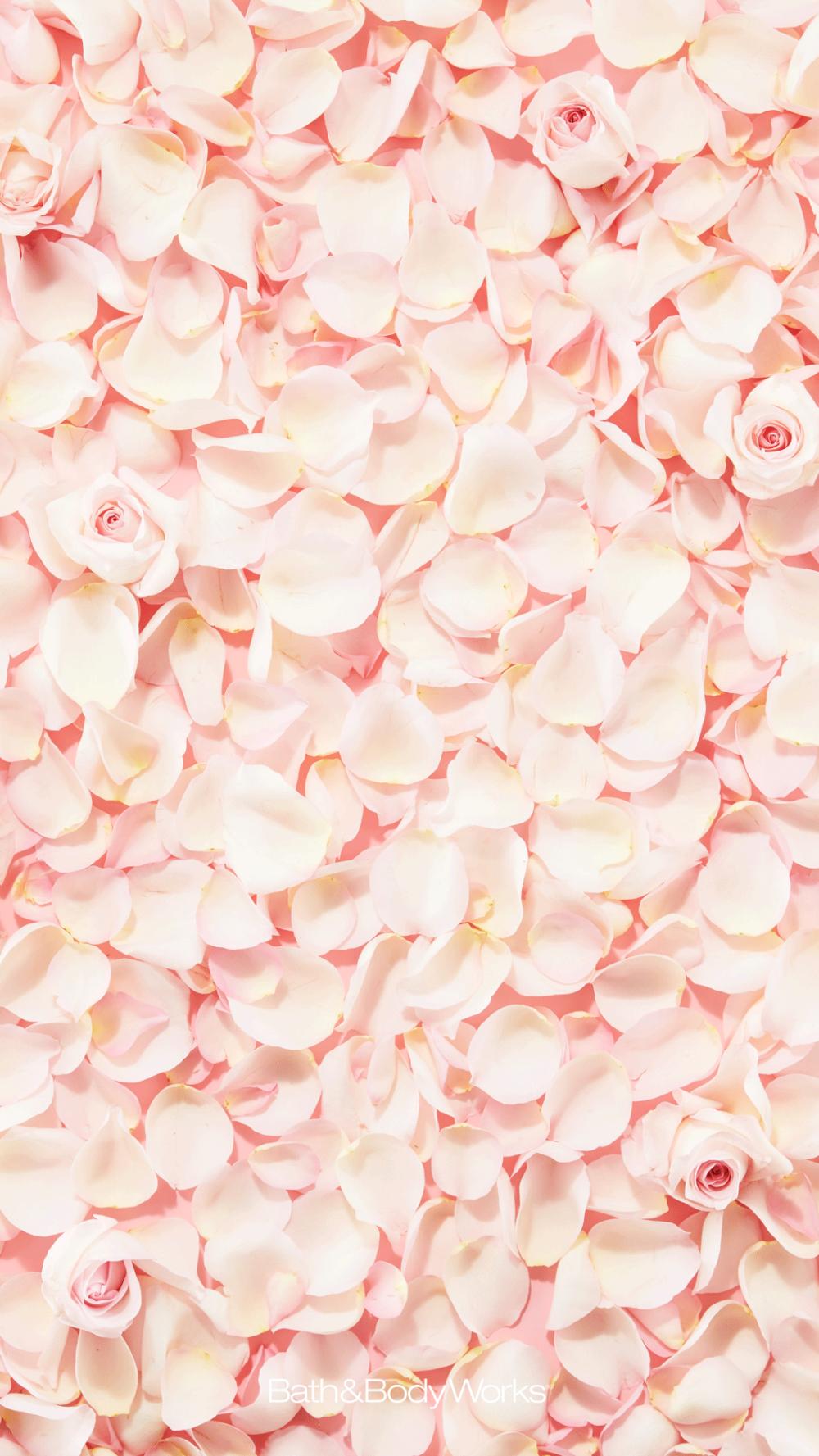 Rose Petals Iphone Wallpaper Background Teal Wallpaper Iphone Iphone Wallpaper Wallpaper Backgrounds