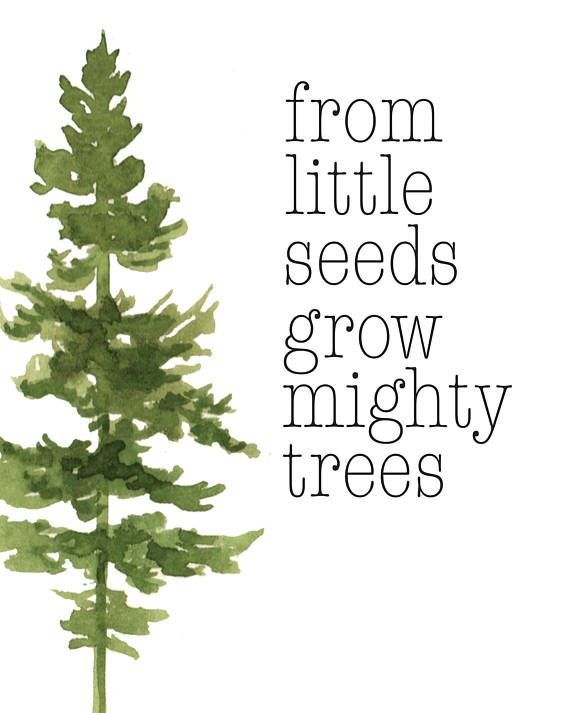 From Small Seeds Grow Mighty Trees Tree Quotes Tree Watercolor
