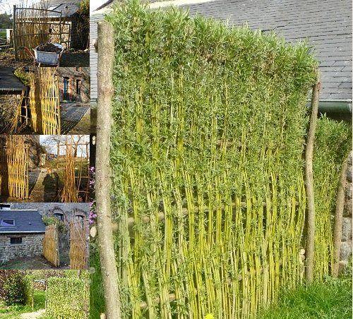 Vannerie vivante tressage de panier jardins et jardinage for Voir deco jardin