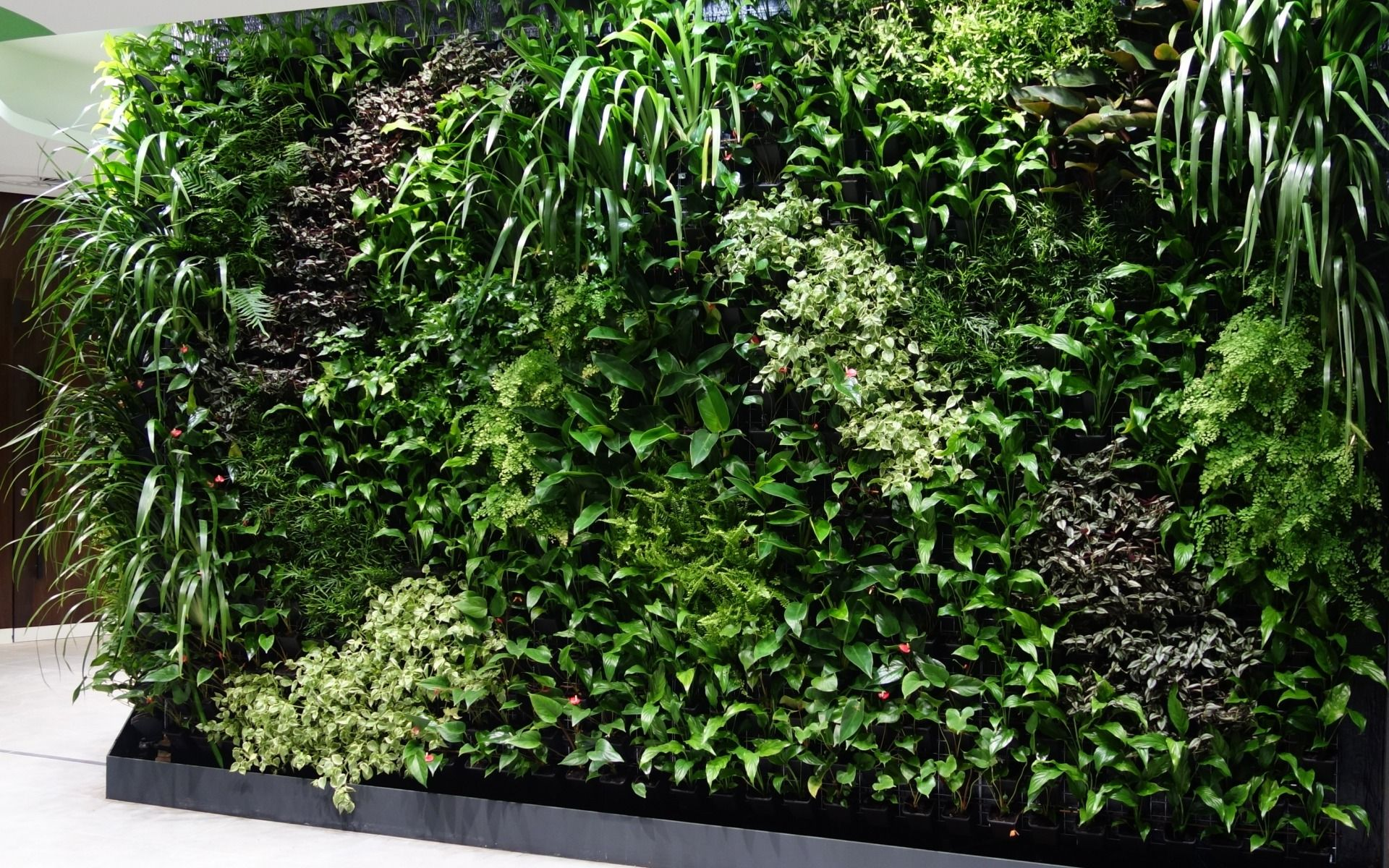 best indoor green wall