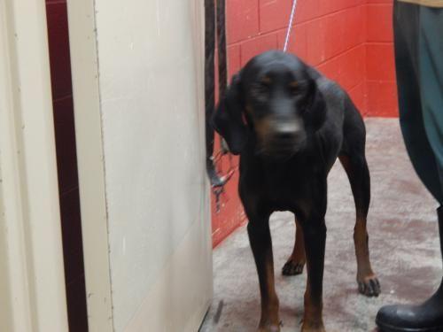 Adopt Mason On Animals Animal Shelter Pets