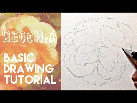 456 How To Draw A Begonia Flower Pencil Drawing Tutorial Youtube Flower Drawing Drawing Tutorial Flower Drawing Tutorials