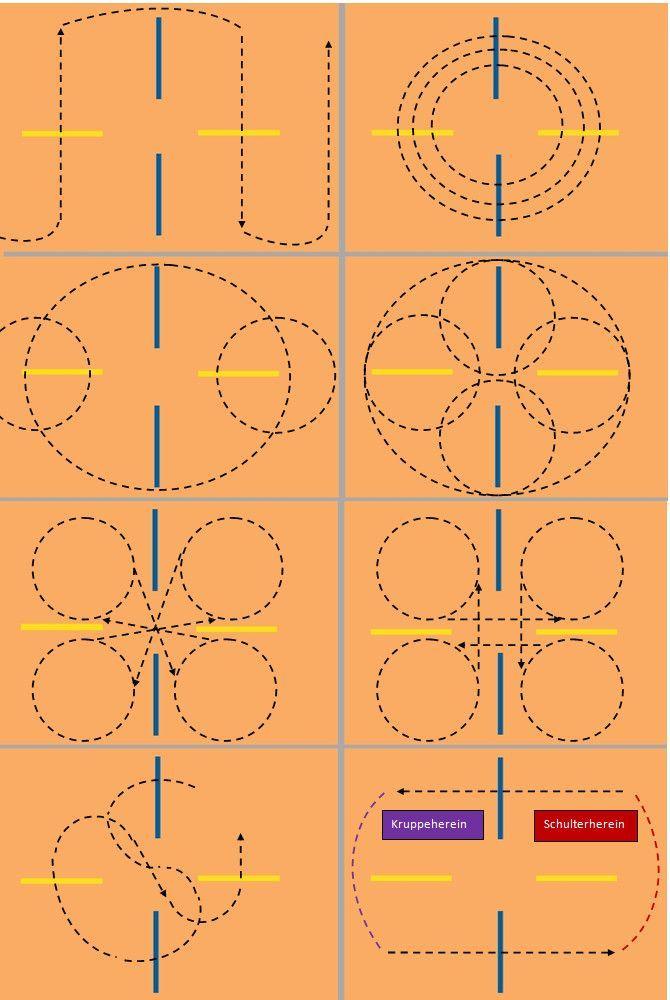Pin von Ubuc Ubuc auf Pferdetraining | Pferdetraining, Pferde training und Dressur