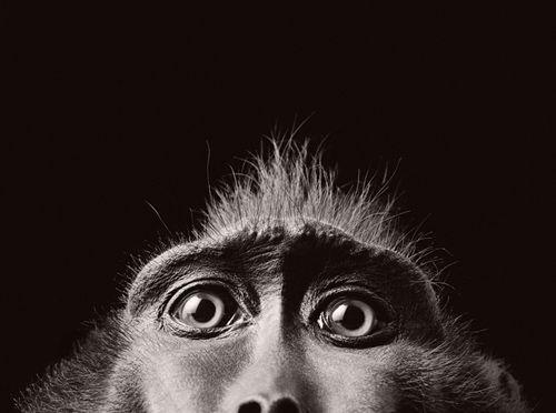 Animal Eyes Eyes Optometry Animal Photography Pet Portraits Animals Beautiful
