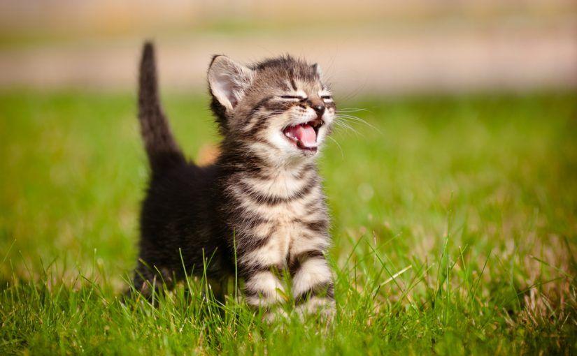 ¿Sabías que los gatos sienten predilección por determinadas cosas? Toma nota de todas las cosas que les gustan a los gatos y haz feliz a tu felino.