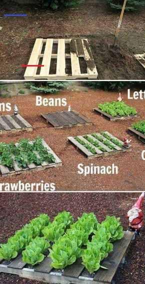 Holzpalette Gemüsegarten  25 gepflegte Gartenprojekte mit Holzpaletten  Easy DIY Garden  wood workin diy Holzpalette Gemüsegarten  25 gepflegte Gartenprojekte m...