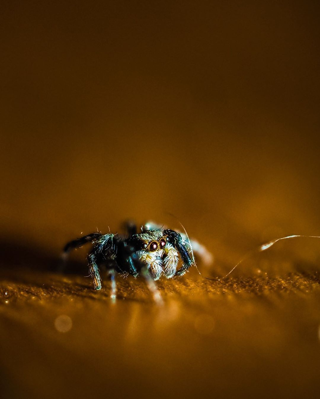 Cheers to @portrait_per_day on Instagram who captured this furry subject 🕷️ #LumeCube #LitByLume #spider #macrophotography #photography #lighting