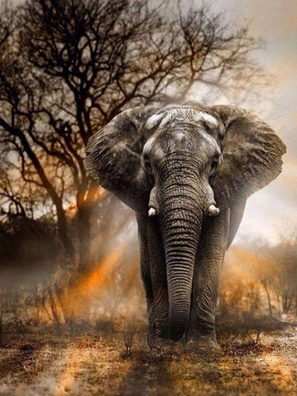 Elephant Elephants Pinterest Animals Elephant And Animals