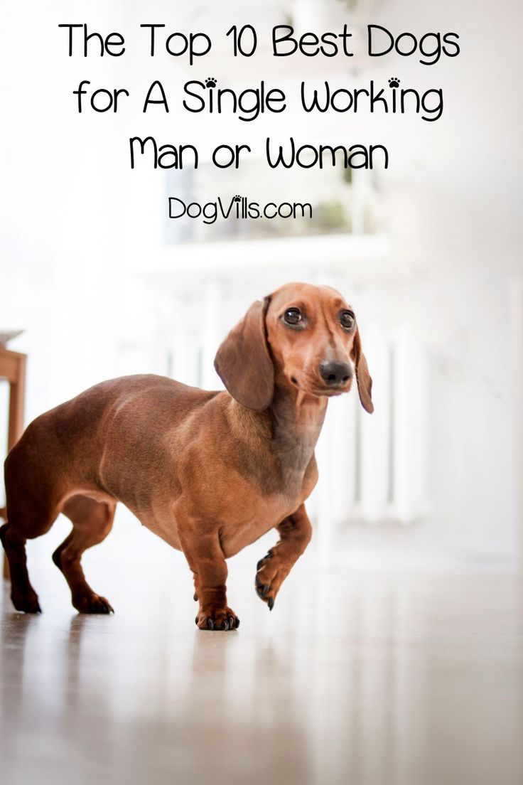 The Top 10 Best Dogs For A Single Working Male Or Female Best