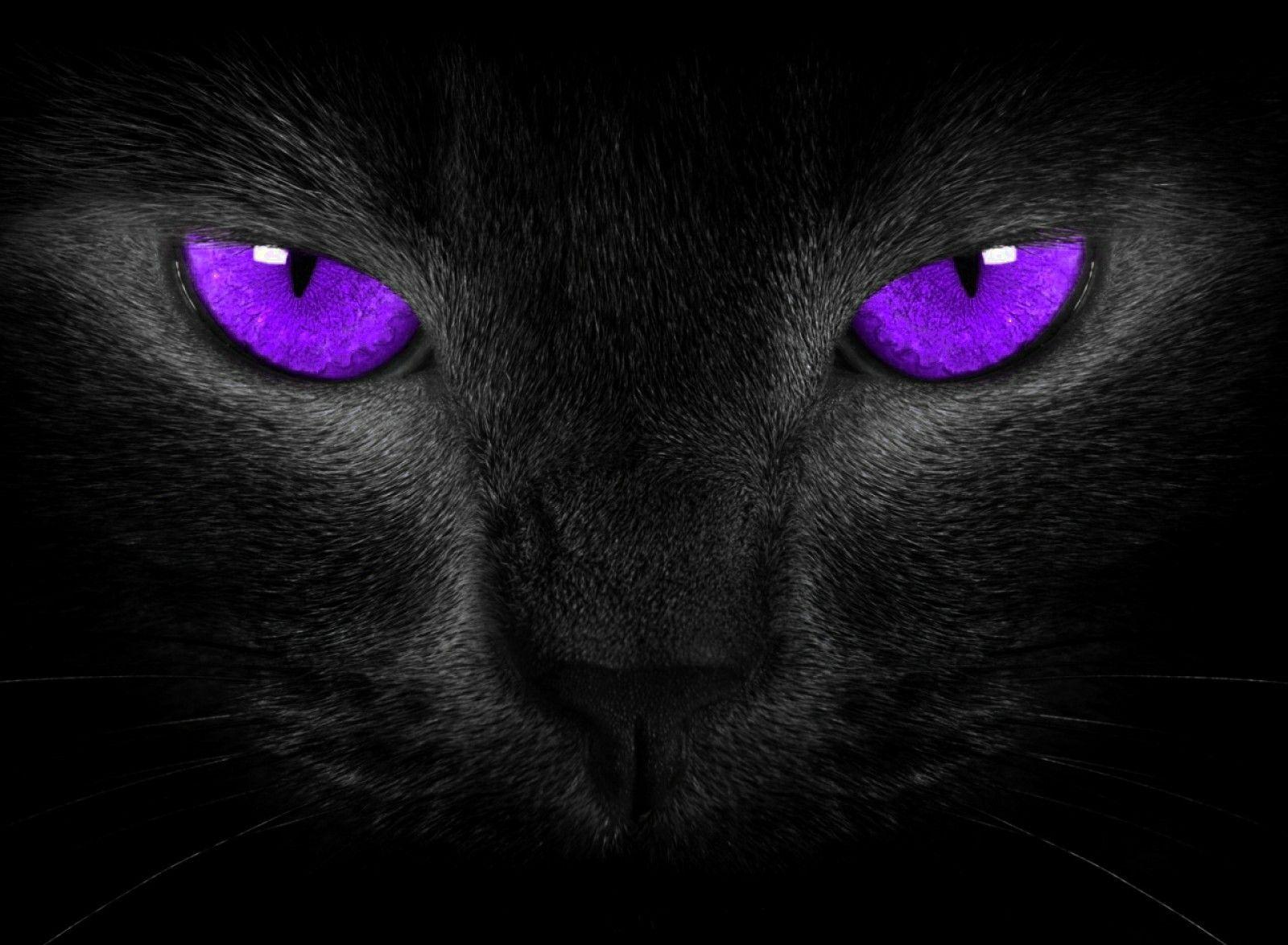 Purple Cat Eyes Cats Purple Cat Eyes Wallpaper