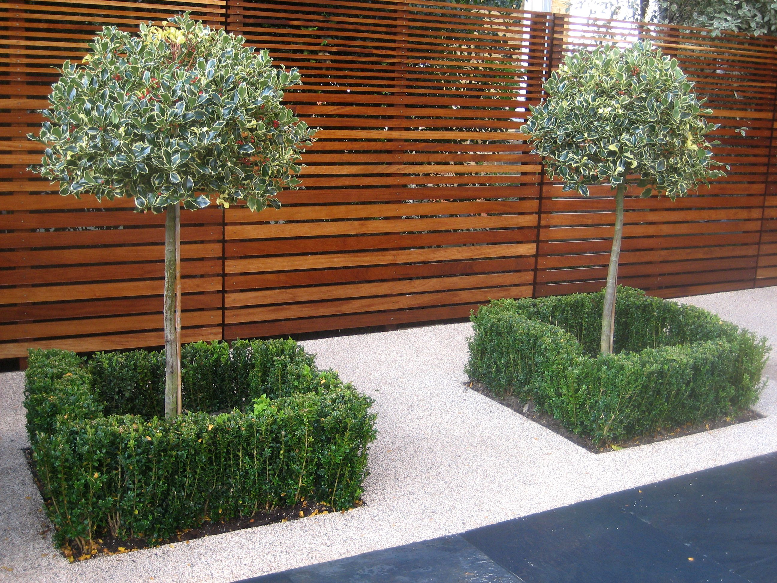 Holly Trees U0026 Box Hedges With Slatted Iroko Fencing
