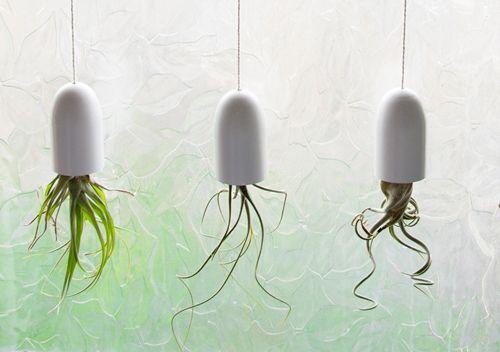 Des pots DIY pour plantes d'intérieur suspendues à l'envers ! Faites des pots pour plantes suspendues à partir de couvercle de shampoing.