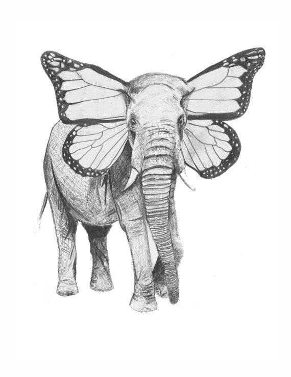 painted elephant butterfly - photo #19