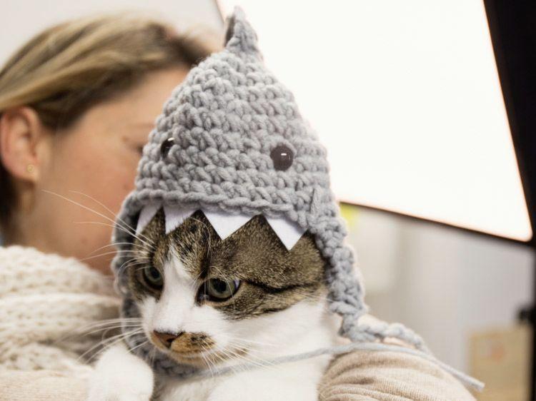 DIY-Anleitung: Haifischmütze für Katze häkeln via DaWanda.com | DIY ...