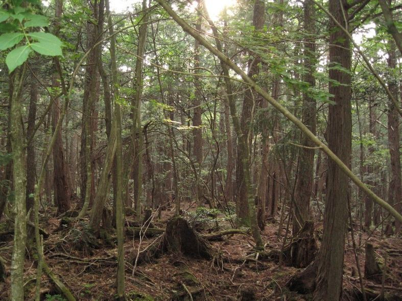 The Suicide Forest, Japan. They are currently making a movie on this forrest in the area of Massachusetts that I live in it stars Matthew Mcconaughey , and they've been filming in and around Worcester Ma and Wachusett mountain in Princeton mass and there's been Matthew spotting all over