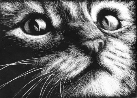 Google Image Result For Cdndailypainters Paintings Kitty Scratchboard Art By Barbara Fox A91fc737552e21b61f804fd53859c27d