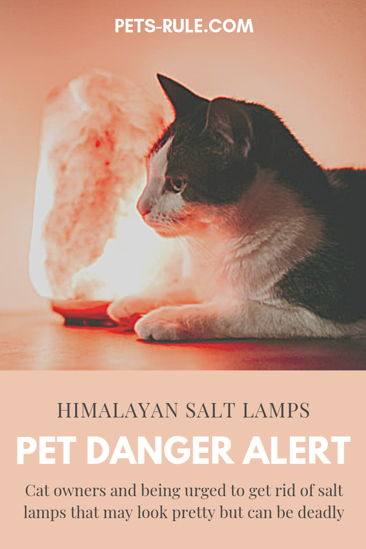 Veterinarians are now warning people about the dangers of