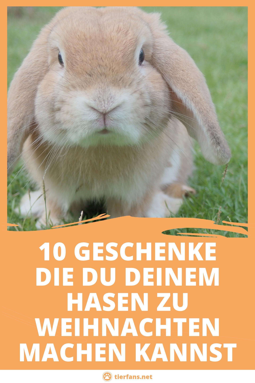 Du Suchst Nach Ideen Und Geschenken Fur Deinen Hasen Oder Dein Kaninchen Zu Weihnachten Wir Haben 10 Ideen Fur Dich Am H Coole Wasserflaschen Hase Tier Fakten