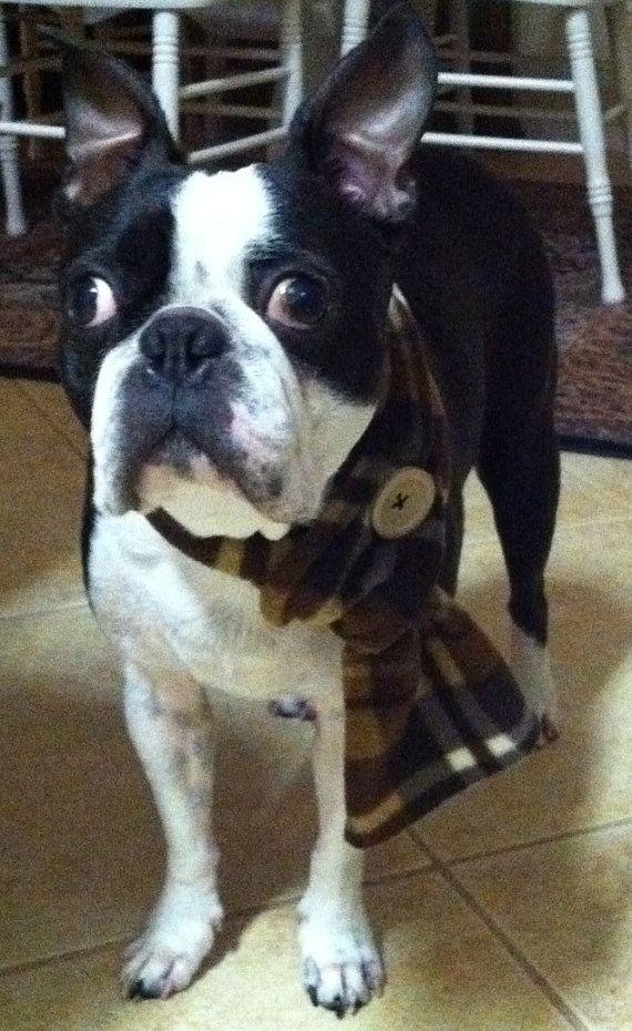 Boston Terrier Al Hull Boston Terrier Dog Scarfs