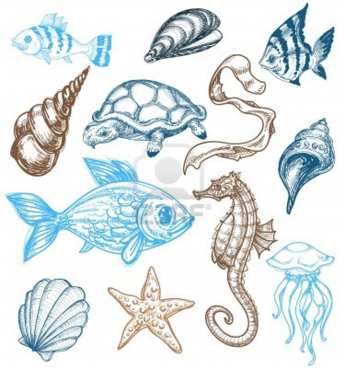 Marine life drawing Sea animals drawings, Sea creatures